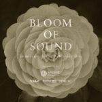 イマーシブ ディスク「BLOOM OF SOUND」